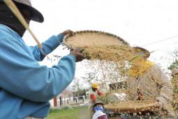 Bone Bolango lakukan upaya khusus amankan produksi padi