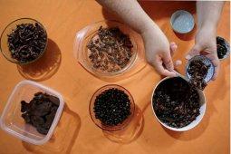 Serangga akan diangkat sebagai santapan lezat oleh Koki Thailand