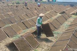 Harga anjlok, jumlah petani tembakau di Tulungagung turun drastis