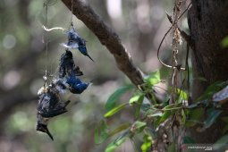 Temuan satwa mati karena perburuan ilegal