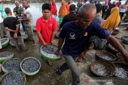 Ikan teri tangkapan nelayan Bagan