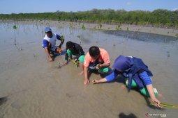Tanam mangrove