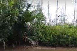 Mukomuko imbau nelayan waspadai buaya di sungai