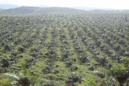 BBPP Lembang gelar pelatihan  teknis tingkatkan produksi kelapa di Halut