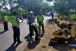 Polisi olah TKP mobil tertimpa pohon tumbang di pantura Situbondo
