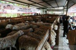 ACT Aceh: Gampong Ie Suum jadi lokasi ternak domba  wakaf