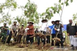 Panen perdana singkong di Aceh Jaya, Gubernur Aceh upayakan bangun pabrik