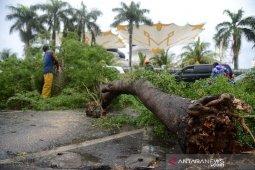 Pohon tumbang kawasan Masjid Raya Baiturrahman