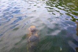 Tiang rumah prasejarah ditemukan di Danau Sentani