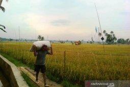 Hasil petani Tapanuli Selatan yang bersawah di Tapanuli Tengah meningkat