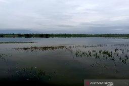 Puluhan hektare sawah di Tapsel terendam banjir