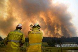 Koala dan walabi terancam punah ketika kebakaran hancurkan 11,2 juta hektare lahan di Australia