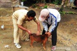 Pasca kasus gigitan, Pemkab Tapsel vaksinasi anjing peliharaan masyarakat