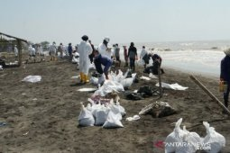 Perairan laut Karawang kembali tercemar limbah minyak mentah