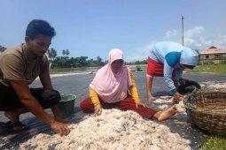 Permintaan udang sabu di Nagan Raya meningkat