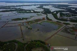 Deforestasi kawasan mangrove Delta Mahakam