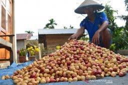Petani Abdya keluhkan murahnya harga pala