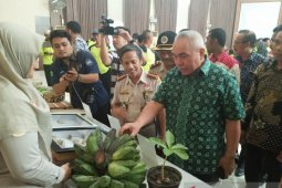 Pisang asal Kaltim masuki pasar ekspor ke Malaysia
