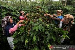 BPS: ekspor kopi Aceh menurun akibat isu tercemar bahan kimia