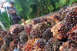 Harga TBS di Bengkulu Rp1.644 per kilogram