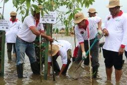 Walhi minta Pemkab Pulau Taliabu antisipasi pengrusakan mangrove