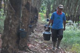 Pabrik pengolahan karet di Sumatera Selatan kebingungan cari bahan baku
