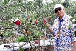 Sindang Dataran disiapkan jadi pengembangan tanaman apel