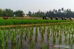 Dedi Mulyadi: Alih fungsi lahan pertanian akibat RUTR