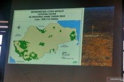Tutupan hutan Provinsi Jambi tersisa 17 persen