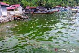 DLH Sumbar turunkan tim ambil sampel air laut berwarna hijau