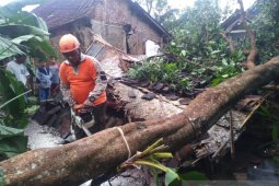 Strong wind, heavy rains damage a dozen of houses in Jember