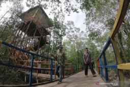 Ekowisata mangrove Pangkal Babu di Jambi