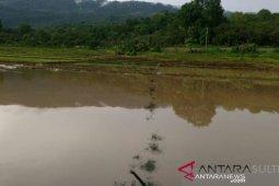 Ada 876 hektare sawah di Karawang terendam banjir