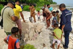Seekor buaya ditemukan mati di Pantai Ubung Namlea
