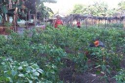 Distan Ternate : petani butuh pupuk organik