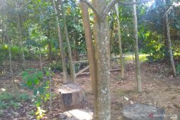 Pegiat Sungai Samarinda rawat 70 spesies pohon