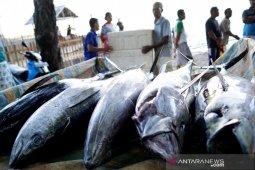 Gorontalo ekspor 93,5 ton ikan tuna ke Jepang