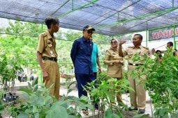 Jagung-bawang NA masuk jajaran 24 varietas unggul nasional