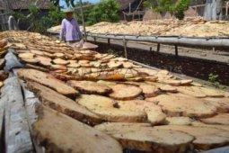 Lima kecamatan di Madiun jadi sentra budi daya porang