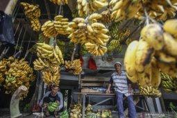 Terapi pisang untuk kesehatan