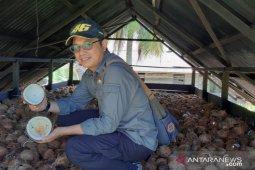 Harga kopra capai Rp6.000 per kilogram di Kubu Raya