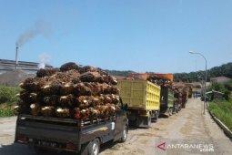Harga sawit di Mukomuko turun Rp100/kilogram