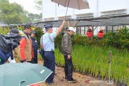 Harga bibit vetiver Rp2000 disebut mahal, ini respon Jokowi