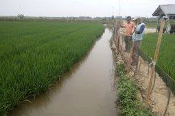 1.100 hektare sawah petani Mukomuko terima bantuan benih padi