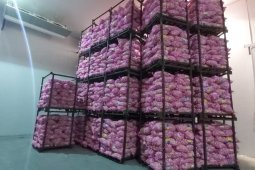 Disperindag Jabar siap tindaklanjuti perintah gubernur terkait bawang putih