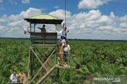 Penanaman kembali solusi peningkatan produktivitas sawit di Kalbar