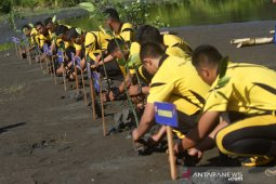Penanaman manggrove serentak di Aceh Barat