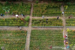 "Foto - Hamparan bunga indah di ""Holland Park"" Tilihuwa-Gorontalo"
