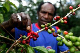 Sayang kopi Wamena belum digarap maksimal, meski sudah dikenal