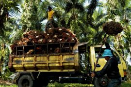 S Sulawesi to construct the sixth palm oil plant